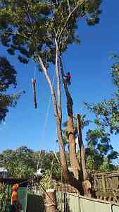 Tree Removal, Pruning, Stump Grinding & Excavation. Cheap rates Warners Bay Lake Macquarie Area Preview
