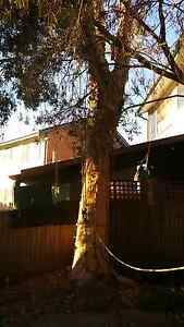 Sydney Tree Removal & Trimming Free Quotes Lidcombe Auburn Area Preview
