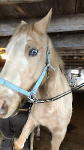 Blue eyed palomino gelding for sale!