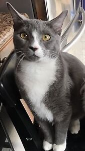 Lost cat. Male short hair. His name is Toothless.