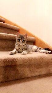 Pet Sitter (CATS/KITTENS ONLY)