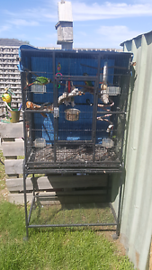 Conure Breeding Pair + cage + breeding box. Wallan Mitchell Area Preview