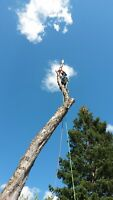 Tree removal and trimming service! Call Etree