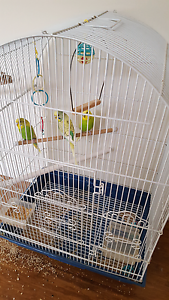 Baby budgies and cage Cranbourne Casey Area Preview