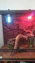 Large Vivarium USR + Hector my Jungle Python Gawler Gawler Area Preview