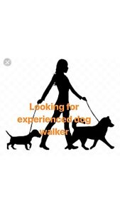 LOOKING FOR: Dog Walker