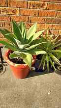 Potted plant Branxton Singleton Area Preview