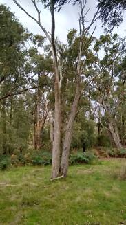Fire Wood, you chop and take away. Cardinia Area Preview