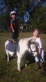 6yo black and white overo pony gelding Medowie Port Stephens Area Preview