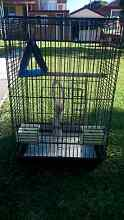 Large bird cage Earlwood Canterbury Area Preview
