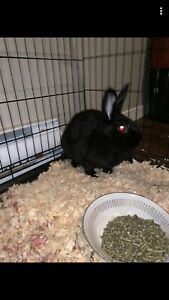 Bunny and Budgie for sale