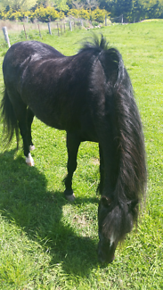 Wanted: Looking for a  family therapy horse/ free long term lease WOTB