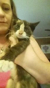 10 WEEK OLD KITTEN FOR NEW HOME! Wantirna South Knox Area Preview