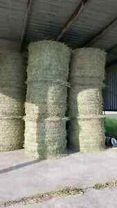 Just Cut This Week Large Round Bales of Hay For Horses Maitland Maitland Area Preview