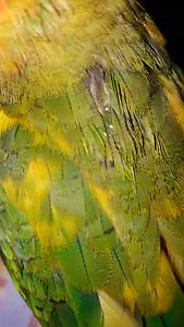Sun conures Kilsyth Yarra Ranges Preview