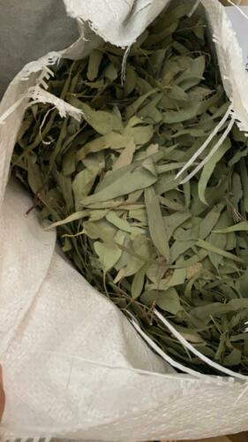 1 libra de Hojas de Eucalipto - Organico pura hoja - Free Shipping