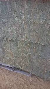 Lucerne 8x4x3 Big square hay bales suitable for horse cattle feed Moss Vale Bowral Area Preview