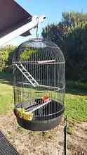 BIRDCAGE GOOD CONDITION Busselton Busselton Area Preview