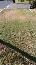 Lawn free pick up canning Vale Bass Hill Bankstown Area Preview