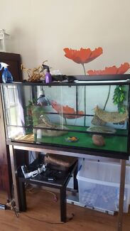 Reluctant sale - bearded dragon and full set up  Rochedale Brisbane South East Preview
