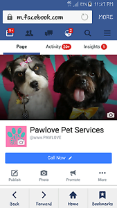 DEAL on Dog Grooming Wynnum West Brisbane South East Preview