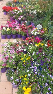 Flowers plants big sale