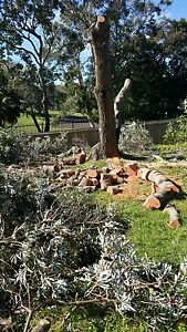 Tree Cutting and Removal Lidcombe Auburn Area Preview