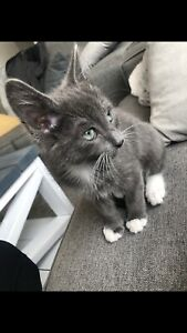 Adorable kitten needs a new home