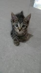 kittens free to a good home Yarrawonga Palmerston Area Preview