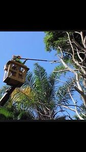 AA DISCOUNT TREE SERVICES Kogarah Rockdale Area Preview