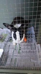 Found rabbit Athelstone Campbelltown Area Preview