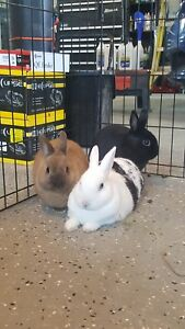 Adorable Rabbit Trio for Adoption