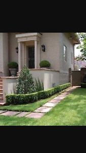 Home/ garden maintenance and rubbish clean up. East Melbourne Melbourne City Preview