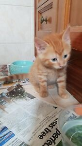 Kittens to good homes