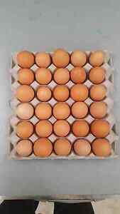 ORGANIC FREE RANGE EGGS - CAGE FREE EGGS - FRESH CHICKEN EGGS Galston Hornsby Area Preview