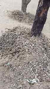 FREE HORSE MANURE Bringelly Camden Area Preview