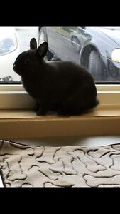year old spayed bunny