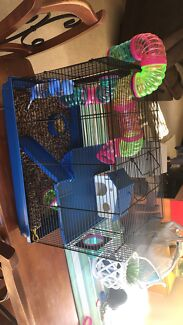 3 mice for sale
