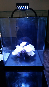 Perfect condition reflex fish tank with filter/light and coral North Lakes Pine Rivers Area Preview