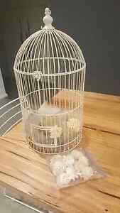 Wedding engagement party wishing well bird cage Franklin Gungahlin Area Preview