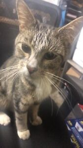 FREE KITTY TO LOVING HOME