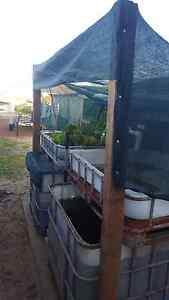 Aquaponics Kwinana Town Centre Kwinana Area Preview