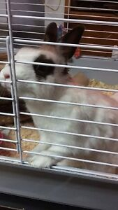 Loveable bunny in search of a nice home