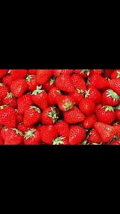 PICK YOUR OWN STRAWBERRIES Gnangara Wanneroo Area Preview