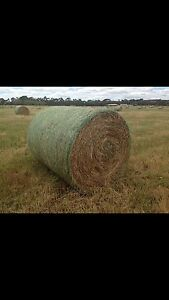 3ft Round Hay Bales- Colac Vic Colac Colac-Otway Area Preview