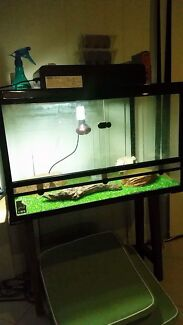 4ft Reptile Tank + Accessories and 4 month old bearded dragon