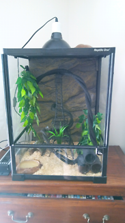Children's python and reptile one enclosure