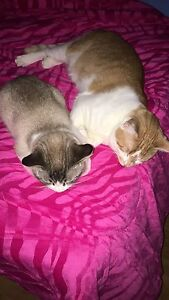 Two uneutered male cats to good homes
