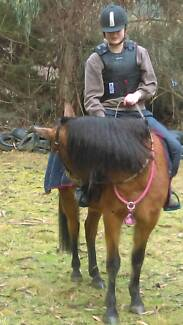 Problem horse handling and Lessons