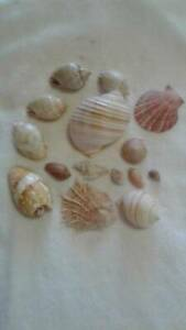 Collection of sea shells in GC